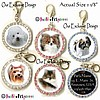 Fancy Pants Fashion Rhinestone Breed Pet ID Tags ~ Your Choice of Color and CUSTOM Design